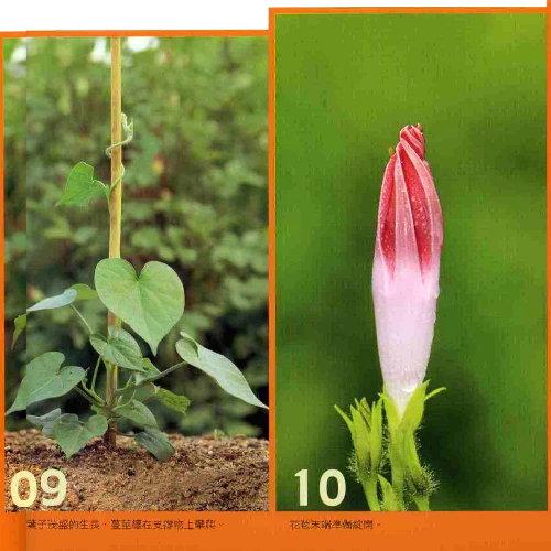 对于植物繁衍后代来说